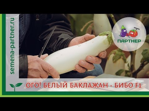 ОГО! БЕЛЫЙ БАКЛАЖАН - БИБО F1