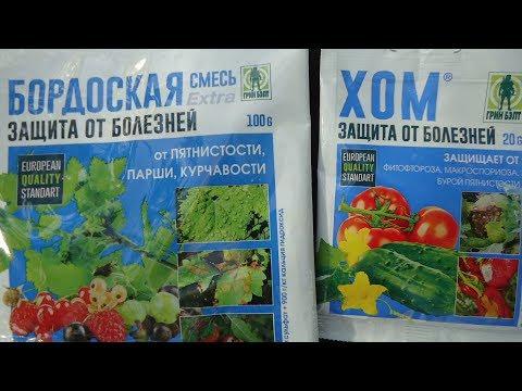 ОБРАБОТКА ТОМАТОВ ОТ ФИТОФТОРЫ. Видео Ольги Черновой 14 июня