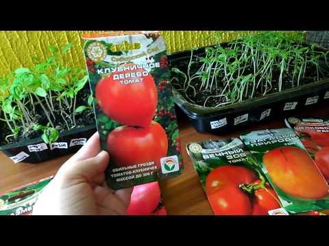 Пикировка рассады томатов 2017