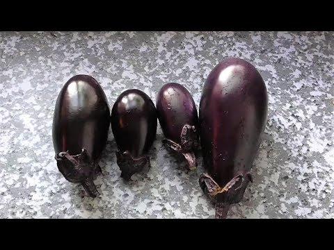 Опыт выращивания баклажана сорта ВЕРА в открытом грунте