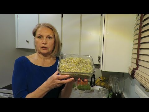 Сыроедение: Как прорастить семена брокколи