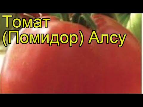 Томат обыкновенный Алсу. Краткий обзор, описание характеристик, где купить семена