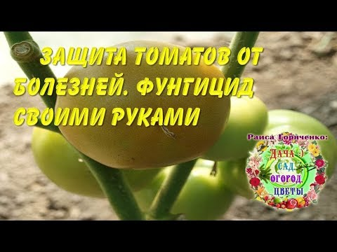 Защита томатов от болезней. Фунгицид своими руками