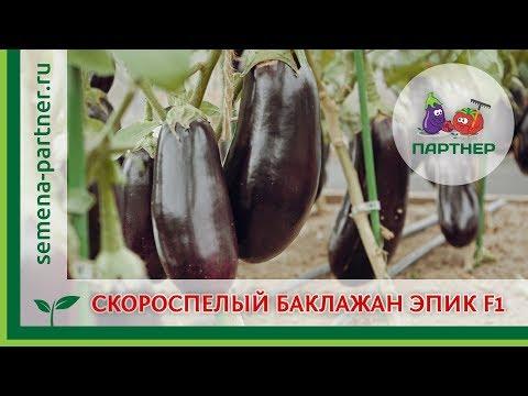 СКОРОСПЕЛЫЙ БАКЛАЖАН ЭПИК F1