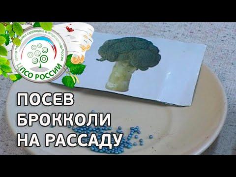 🥦 Посев брокколи на рассаду. Выращивание брокколи.