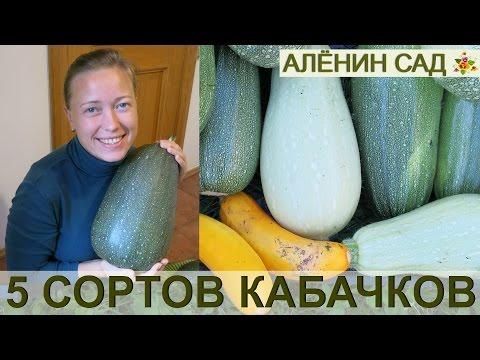 ЛУЧШИЕ СОРТА КАБАЧКОВ ☛ Сравнение 6 сортов кабачков!
