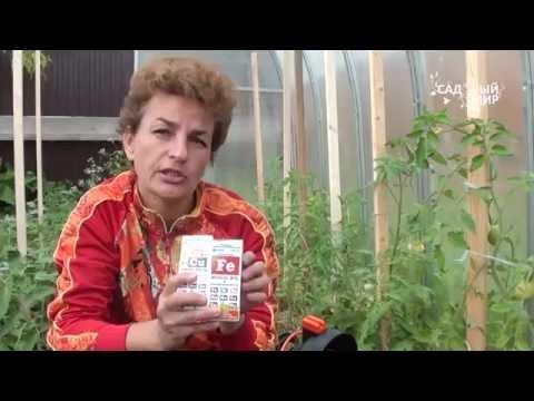 Почему желтеют листья томатов Удобрения с микроэлементами