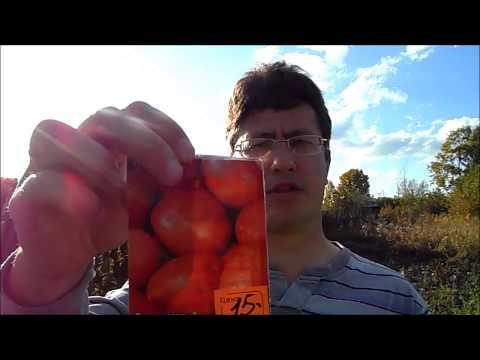 Картофель из семян (Сбор урожая суперэлиты - Краса, Императрица).