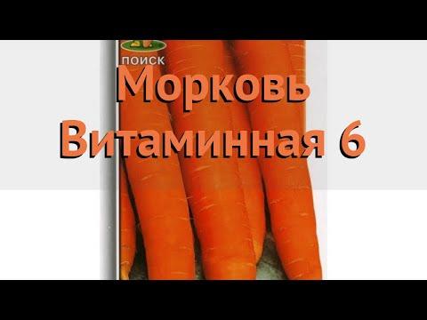 Морковь обыкновенный Витаминная 6 (vitaminnaya 6) 🌿 обзор: как сажать, семена моркови Витаминная 6