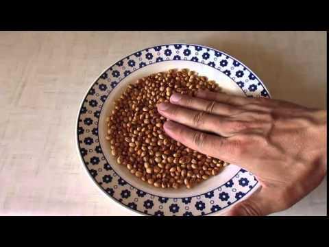 Семена черешни - подготовка