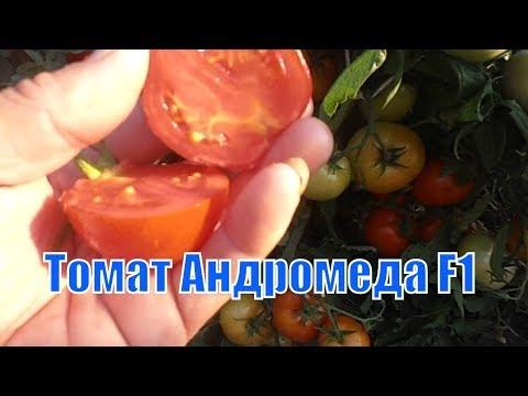 Урожайные томаты. Томат Андромеда F1.
