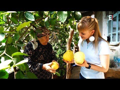 Лимоны размером с кокос растут на юге