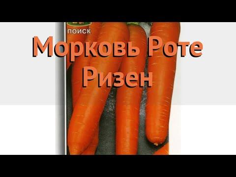 Морковь обыкновенный Роте Ризен (rote rizen) 🌿 обзор: как сажать, семена моркови Роте Ризен