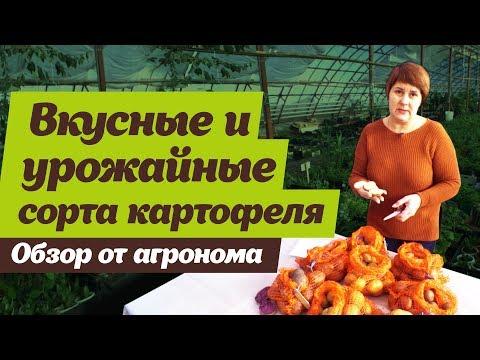 Какие сорта картофеля выбрать. Советы агронома