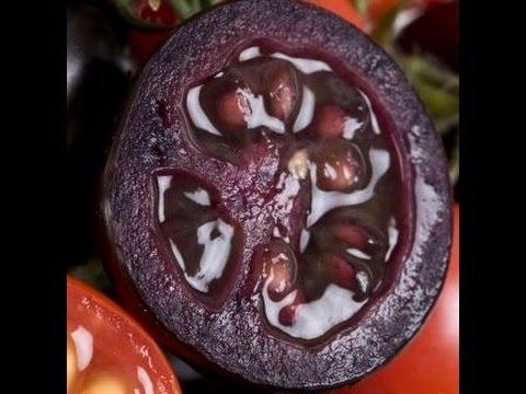 Черноплодные экзотические томаты