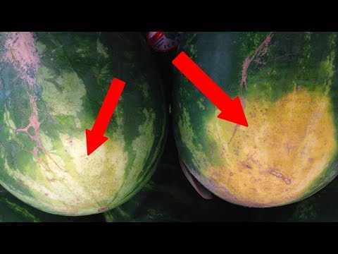 Как выбрать ИДЕАЛЬНЫЙ арбуз
