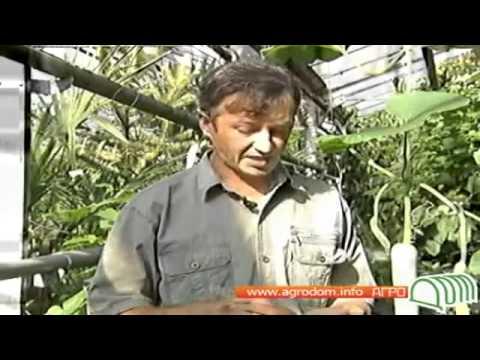 Видео о выращивании кабачков