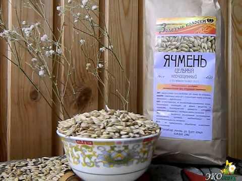 Зерно ячменя - польза, применение, свойства и противопоказания