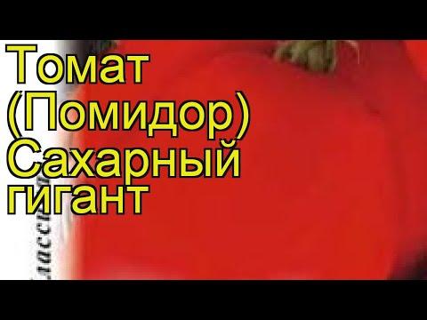 Томат Сахарный гигант. Краткий обзор, описание характеристик, где купить семена solánum lycopérsicum