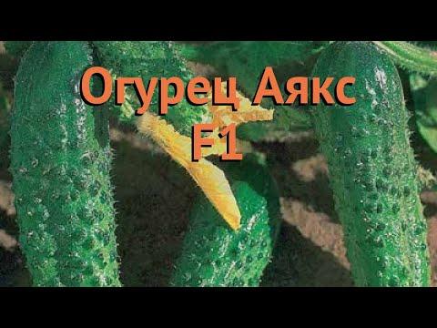 Огурец обыкновенный Аякс F1 (ayaks f1) 🌿 огурец Аякс F1 обзор: как сажать семена огурца Аякс F1