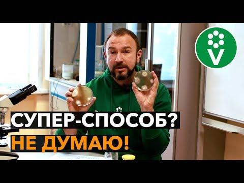 ФИТОФТОРА ПОМИДОРОВ - поможет ли медная проволока?