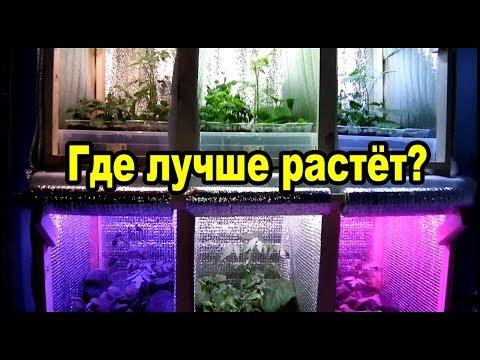 Фитолампы для рассады - тест шести спектров. Где лучше растёт?