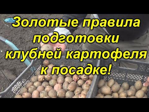 Урожай картошки будет отличным - проверено на практике!!!