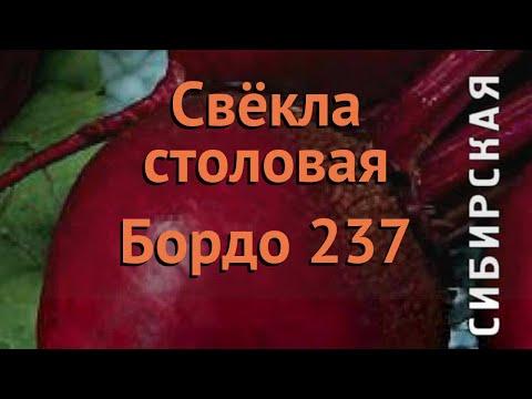 Свекла столовый Бордо 237 (bordo 237) 🌿 свекла Бордо 237 обзор: как сажать семена свеклы Бордо 237