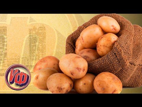 КАРТОФЕЛЬ: ПЛОД КАРТОФЕЛЯ НЕ КЛУБЕНЬ А ЯГОДА! Интересные факты о картофеле!
