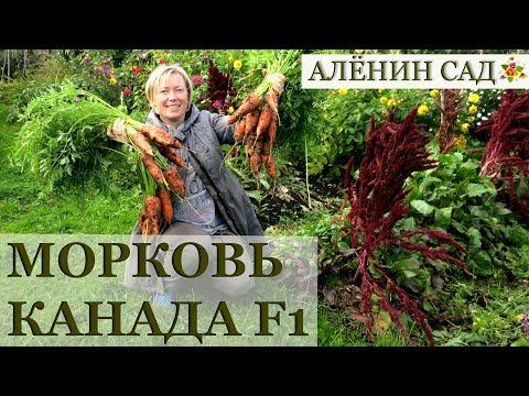ОТЛИЧНАЯ морковь КАНАДА!!!