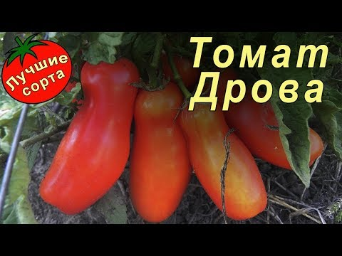Томат Дрова (лучшие урожайные сорта томатов)