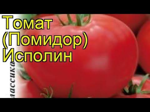Томат Исполин (Томат). Краткий обзор, описание характеристик, где купить семена solánum lycopérsicum