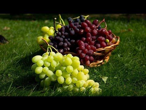 Лучшие столовые сорта винограда для средней полосы. Урожай 2019