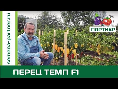 САМЫЙ УРОЖАЙНЫЙ ПЕРЕЦ ТЕМП F1
