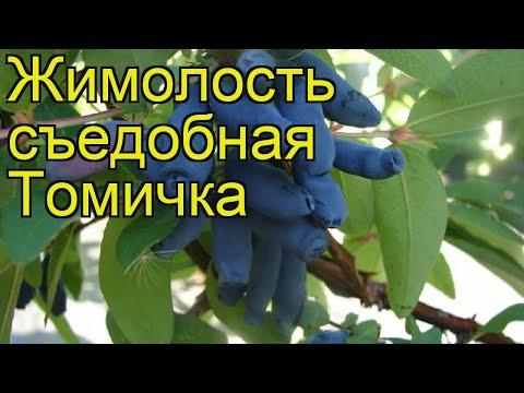 Жимолость съедобная Томичка. Краткий обзор, описание характеристик lonicera edulis Tomichka