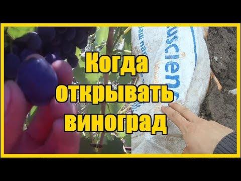 Выращивание винограда / Пора открывать виноград 2019 / Когда открывать виноград после зимы