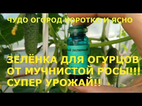 ПОДКОРМКА ОГУРЦОВ ЗЕЛЕНКОЙ !!!РАСКРЫВАЕМ ВСЕ СЕКРЕТЫ!!!