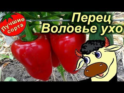 Перец сладкий Воловье ухо (Лучшие сорта сладкого перца)