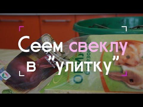 "Сеем свеклу в ""улитку"" (07.03.2016 г.)."