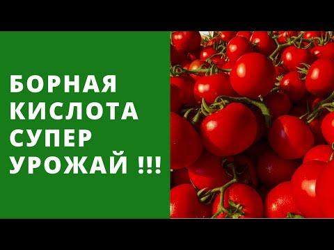 Борная Кислота - лучший эффект для урожая!!! Помидоры, огурцы, баклажан, перец и другие