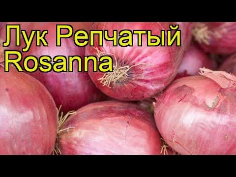 Лук репчатый Розанна. Краткий обзор, описание характеристик, где купить луковицы Rosanna