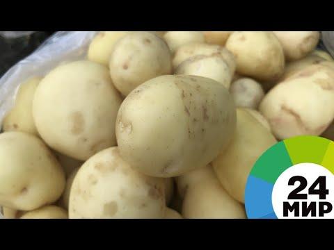 Кадмий и зеленые клубни: Роскачество проверило картофель - МИР 24