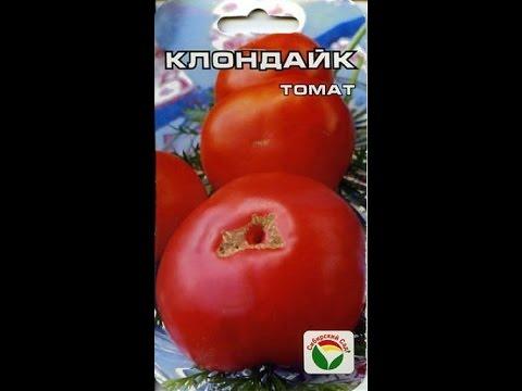 Томат Клондайк / Урожай 2016 / Высокорослые крупноплодные томаты (помидоры)