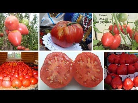 Лучшее. Необычное. Эксклюзивное. Знаменитые Минусинские томаты.