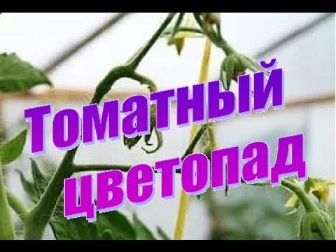 Опадают цветы у томатов. Что делать?
