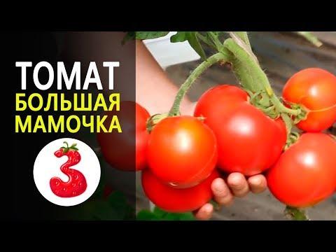 ТОМАТ БОЛЬШАЯ МАМОЧКА сладкие мясистые плоды. Ранний детерминантный томат. Гавриш.