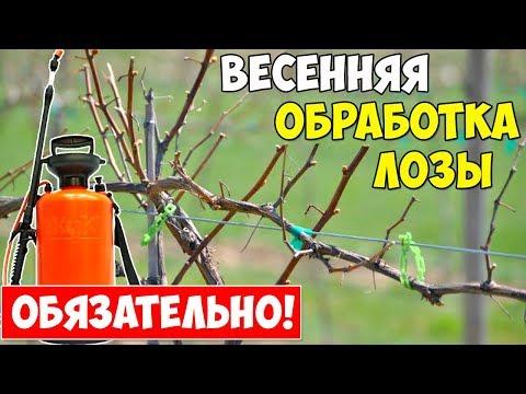 ПЕРВАЯ ОБРАБОТКА ВИНОГРАДА ВЕСНОЙ от болезней и вредителей!!!