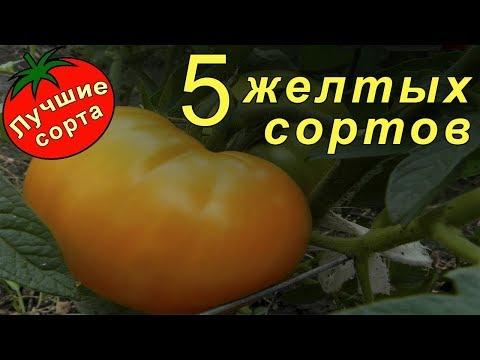 Желтые томаты (Лучшие сорта томатов)