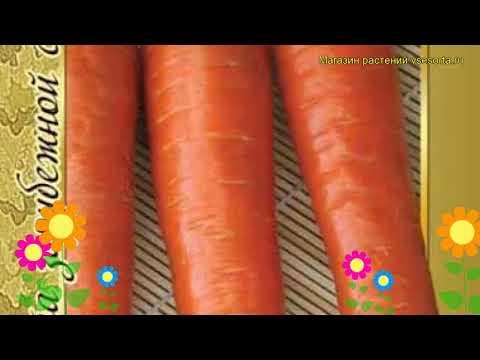Морковь Ромоса (Морковь Romosa). Краткий обзор, описание характеристик, где купить семена Romosa