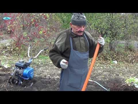 Посадите малину именно ТАК и ВСЕГДА будете с урожаем!!!